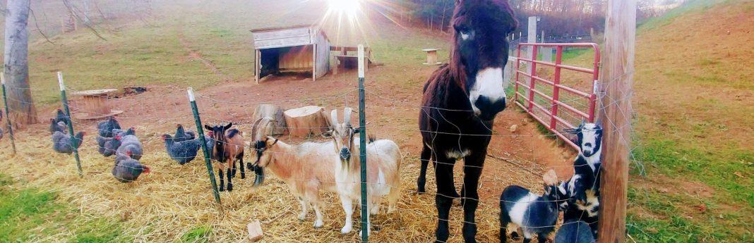Blog   Franny's Farm