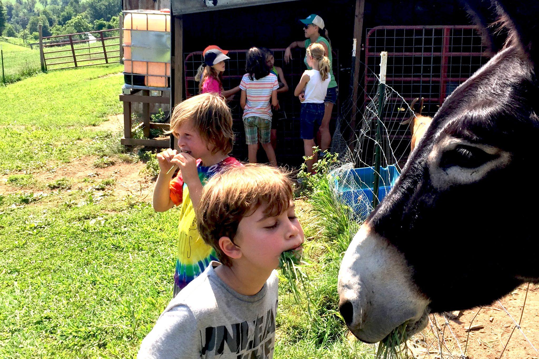 Blog | Franny's Farm